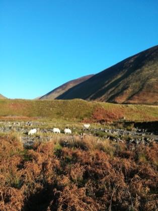 Die Schottischen Borders in Schottland sind ein beliebtes Reiseziel.