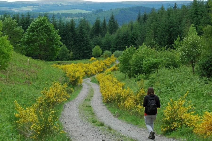 Der Trossachs Trail unerer Wanderreise ist eine bergige Region im Sueden Schottlands.