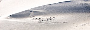 Shark-attack op de Noordvaarder