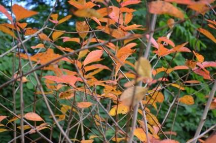 Herbst in der Obstallee