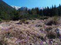 Jar v Tichej doline