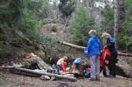 Pri jaskyni bolo vylámaných veľa borovíc od vetra