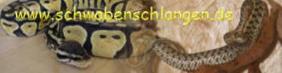 Schwabenschlangen.de
