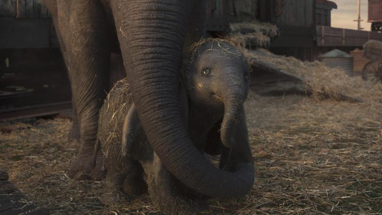 """MOTHER AND SON – In Disney's live-action reimagining of """"Dumbo,"""" a circus owner purchases an expectant mother elephant in hopes that her adorable offspring will bring in the crowds. Directed by Tim Burton, """"Dumbo"""" opens in U.S. theaters on March 29, 2019...© 2019 Disney Enterprises, Inc. All Rights Reserved.."""