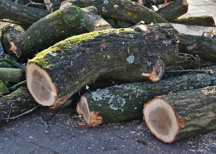 Holzeinschlag führt zu kurzfristigen Einschränkungen der Waldnutzung