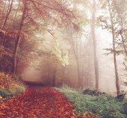 Dunkle Herbstzeit – positive Gedanken und Lichttherapie