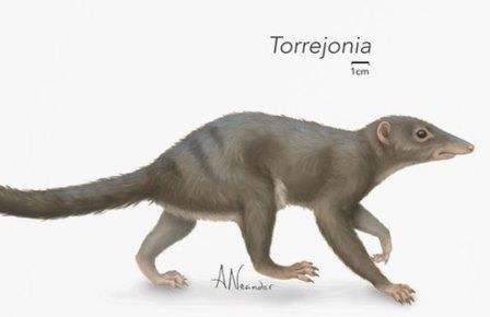 Torrejonia wilsoni