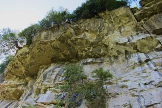 Ancient cedars on escarpment cliff face. Photo: Fiona Reid