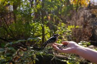 Downy woodpecker. Photo: Elizabeth Pratt.