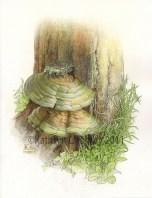 Bracket Fungus by Kathryn Chorney