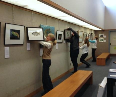 Hanging the exhibit. Photo: Emily S Damstra