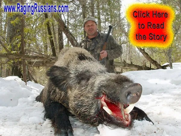 Authentic Boar Hunt and the 30-30 Winchester, a North American Classic