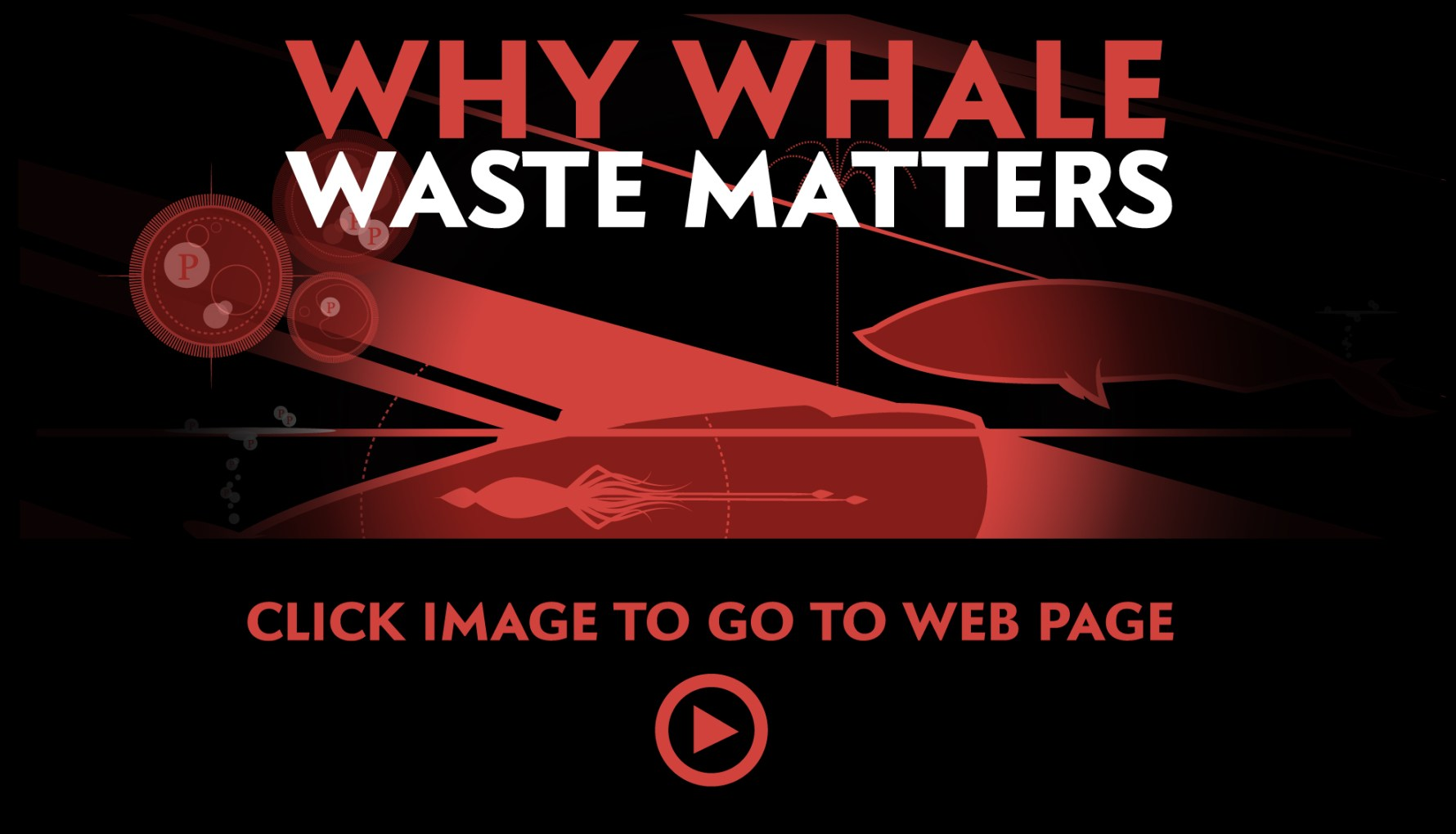 SCIENTIFIC AMERICAN WHALE LINK