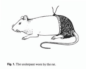 Image result for rat in pants