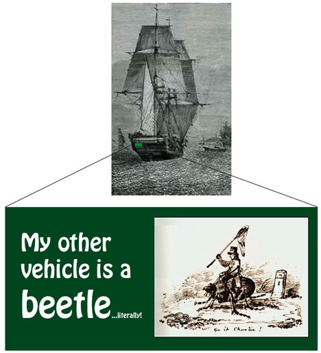 Darwin's Beagle Bumper Sticker