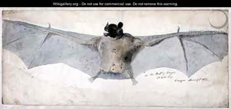 Bats of the Brazils