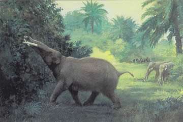 gomphothere reconstruction