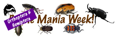Orthoptera Mania logo