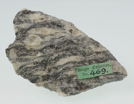 Augen Gneiss from Rio- collected by Darwin