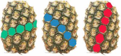 pineapple math