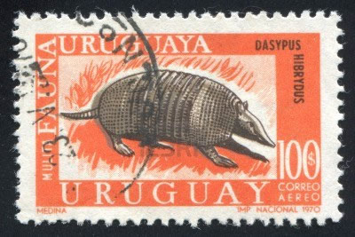 1970 stamp of armadillo