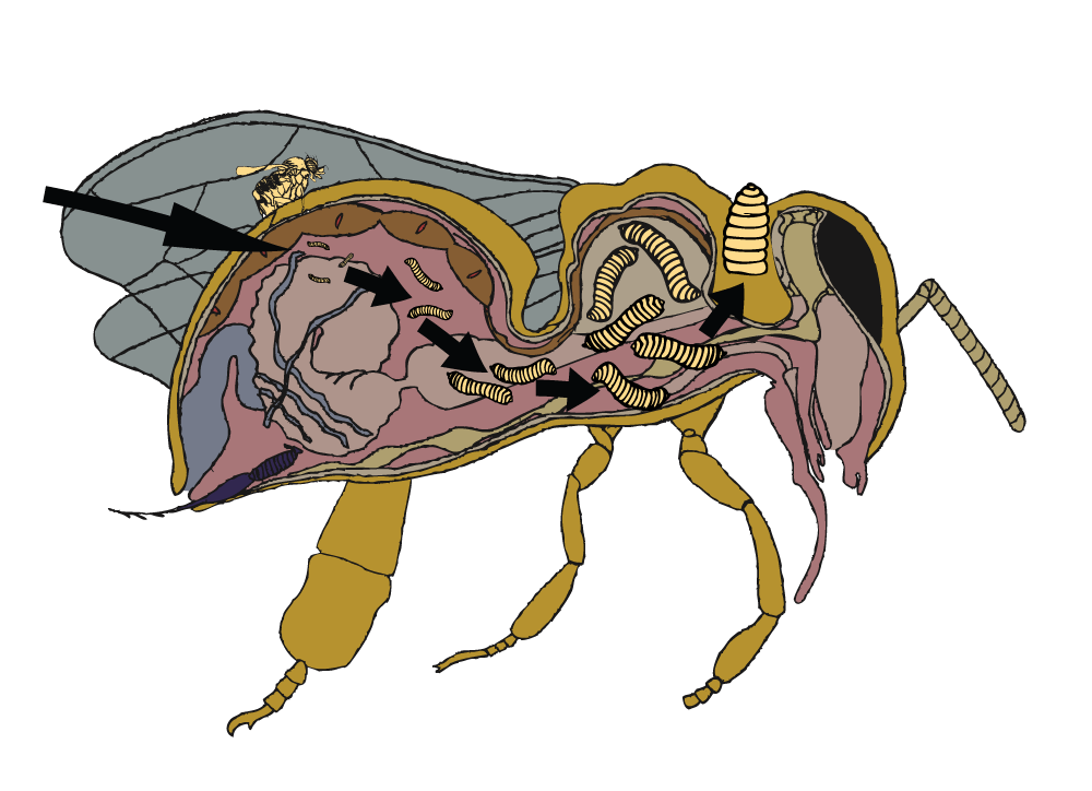 zombiebee