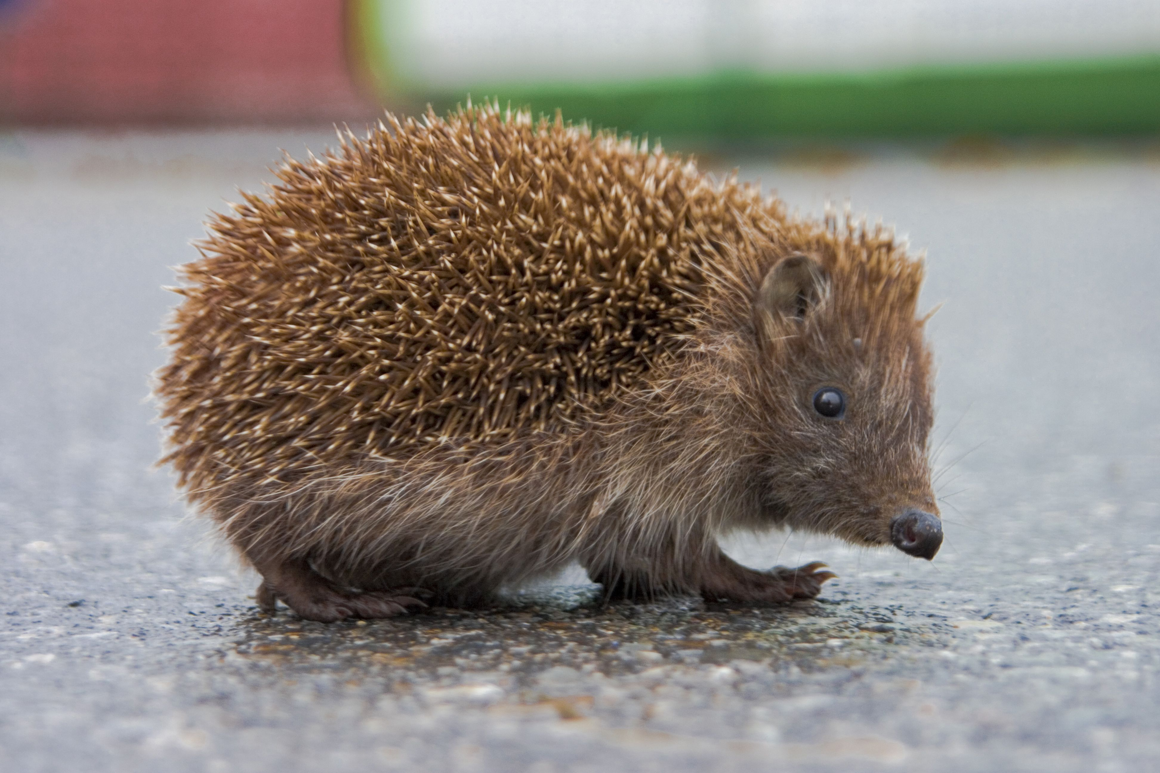 best website 6f2bb 361f1 Are You a Hedgehog or a Fox