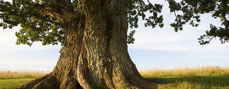 Image result for Trees istock