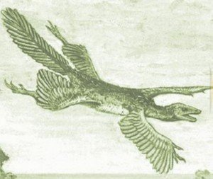 """Tetrapteryx"" by William Beebe - http://penguinology.blogspot.com/2010/02/bird-from-dinosaur-or-was-it-other-way.html. Licensed under Public domain via Wikimedia Commons - http://commons.wikimedia.org/wiki/File:Tetrapteryx.jpg#mediaviewer/File:Tetrapteryx.jpg."