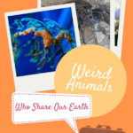 Ten Weird Animals Who Share our Earth