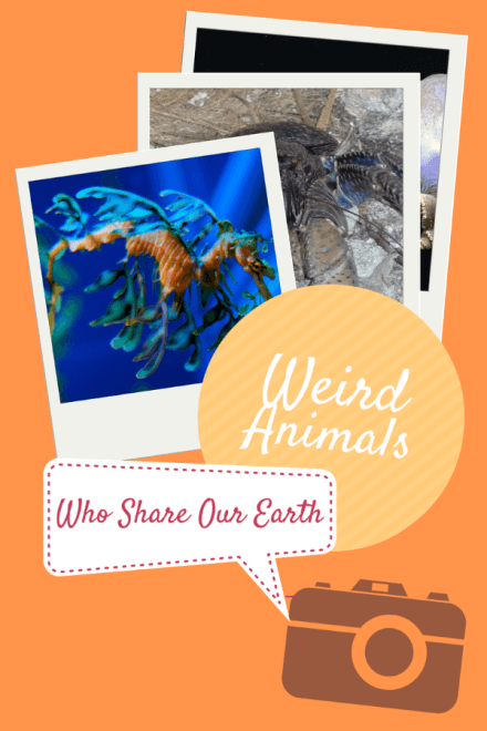 10 Weird, Absolutely Awesome Animals Who Share our World