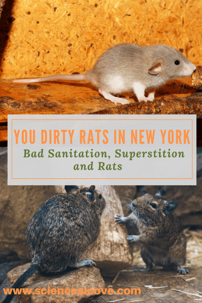 You Dirty Rats in New York! Bad Sanitation, Superstition and Rats