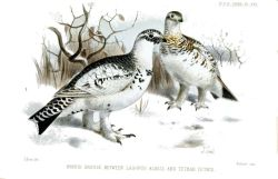 Feathers work as snow-shoes