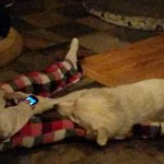 Treasured Friendships found with Dogs