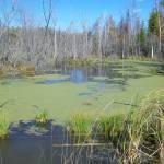 Marsh in Millbrook