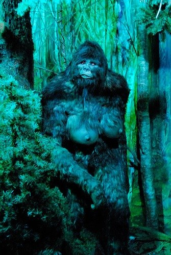 What in the World do you Know about Bigfoot?