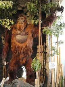 https//upload.wikimedia.org/wikipedia/commons/a/aa/Gigantopithecus_blacki%2C_model_-_San_Diego_Museum_of_Man_-_cropped.JPG