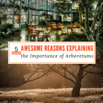 5 Awesome Reasons Explaining the Importance of Arboretums