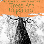 Top 10 Ecology Reasons Trees Are Important