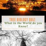 Tree Biology Quiz:  What in the World do You Know?