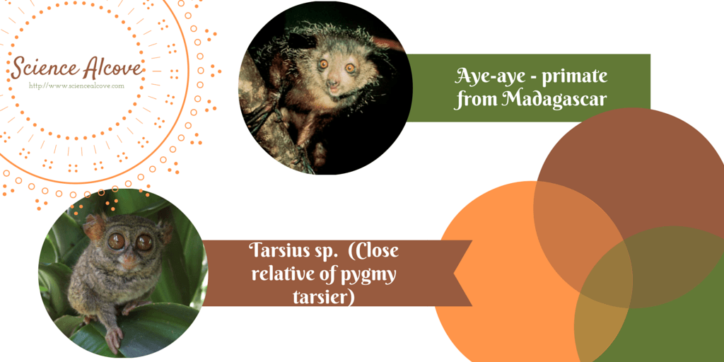 Weird Primates: Our Endangered Cousins
