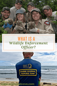 What is a Wildlife Enforcement Officer - This is a career for those mainly in environmental science. There are many schools for kids to choose from. Even those in forensic studies can find a place in this field.