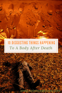 10 Disgusting Things Happening to a Body After Death - http://sciencealcove.com/2016/06/10-things-happening-body-after-death/