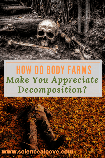 Body Farms provide loads of data to law enforcement agencies for determining time of death. The provide invaluable forensic data for solving homicides. The two best reasons to donate your body to a body farm are a green burial and your legacy of advancing scientific progress. Who knows? You might even provide the evidence needed to catch a killer. #forensics #science #crimescenes #anthropology #highschool #forkids""