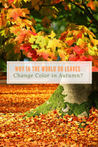 Why in the World do Leaves Change Color in Autumn-http://sciencealcove.com/2016/09/why-in-the-world-do-leaves-change-color-in-autumn/