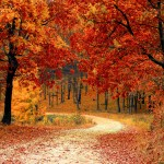 Why in the World Do Leaves Change Color in Autumn?