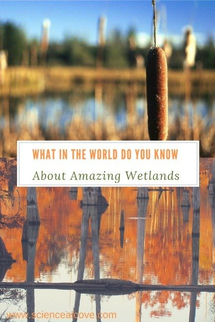 What in the World Do You Know About Amazing Wetlands -https://sciencealcove.com/2017/02/what-do-you-know-about-amazing-wetlands/