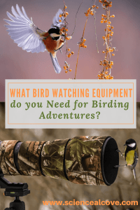 What Bird Watching Equipment do you Need for Birding Adventures-http://sciencealcove.com/2018/02/what-bird-watching-equipment-do-you-need/