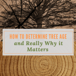 How to Determine Tree Age and Really Why it Matters