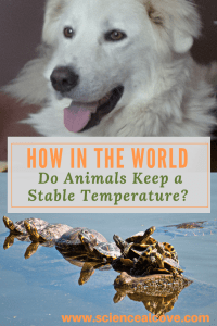 How in the World Do Animals Keep a Stable Temperature?-bottom photo by:bottom: Photo by Mircea Iancu from Pexels